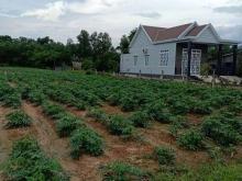 Đất Phú Thạnh 1000m2 Giá Rẻ Giáp Đường vành Đai 3