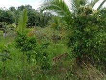 Bán đất tại Đường Lê Văn Lương, diện tích 500m2  giá 2.750 Tỷ, Hxh,ShR