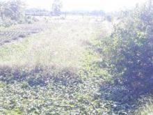 Bán đất nền xã Thạnh Đức, huyện Bến Lức, Long An