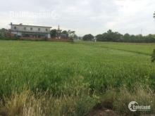 Cần bán 11.000 m2 đất vườn trong khu dân Bùi Thanh Khiết – Bình Chánh