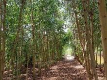 Bán gấp lô đất đẹp DT lớn tại xã Nguyễn Phích, huyện U Minh, giá tốt