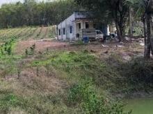 Đất trang trại xã Hiếu Liêm-huyện Bắc Tân Uyên