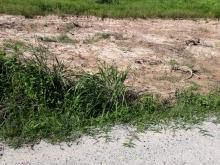 Đất Sau Lưng KDC Nam Long - Bàu Bàng 285tr/1000m2