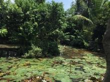 Bán vườn sầu riêng và măng cụt mặt tiền rạch sông Lu xã Trung An Củ Chi