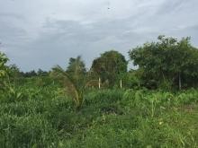 Đất vườn giá tốt gần sông xã Bình Mỹ Củ Chi