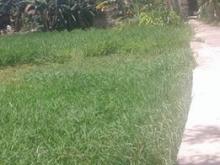Cho thuê lô đất mặt tiền đường Hà Kỳ Ngộ, mặt bằng rộng rãi, giá thuê rẻ: 30 tri
