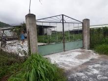 Bán trang trại đang hoạt động xã Tóc tiên thị xã Phú Mỹ