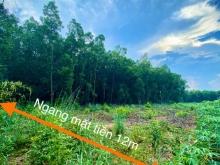 Bán lô đất 2MT 1000m2 ngay cổng KCN Phước Bình,SHR