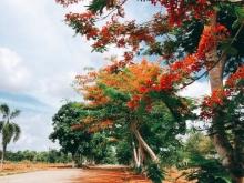 Đất Gần Sân Bay Quốc Tế Long Thành