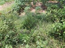 Đất nông nghiệp xã Vĩnh Thanh-Nhơn Trạch