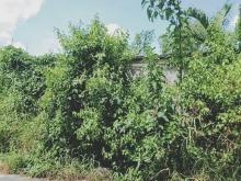 Bán đất vườn 330m2 ngang 7m giá 3,050 tỷ mặt tiền đường nhựa Phạm Tấn Mười