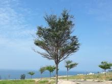 Bán đất biển Mũi Né, Phan Thiết, Bình Thuận