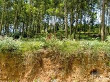 Bán gấp lô đất 2120m2 xã Minh Quang, Ba Vì, Hà Nội