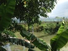 Bán đất gồm: nhà, vườn thanh long, dừa, mít,... (có điện bình 100 KVA)