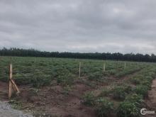 Đất mặt tiền đường DT756, Chơn Thành, 1000m2, giá 550tr, SHR.