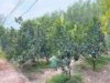 Đất nhà vườn mặt tiền đường Bàu Tre, xã Bình Lợi, Vĩnh Cửu. 1020m giá chỉ 2ty550