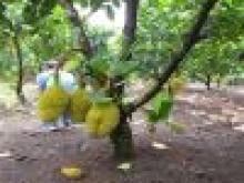 Cần bán đất vườn 3,2ha có 500m2 thổ cư phường bảo vinh Thành Phố Long Khánh Tỉnh Đồng nai